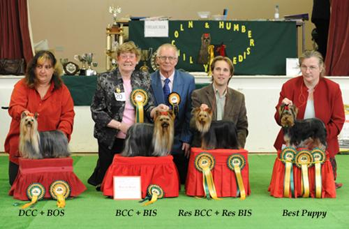 The yorkshire terrier club co uk